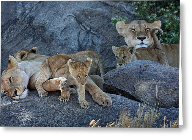 Serengeti Pride Greeting Card