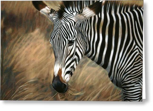 Serengeti Zebra Greeting Card by Carol McCarty