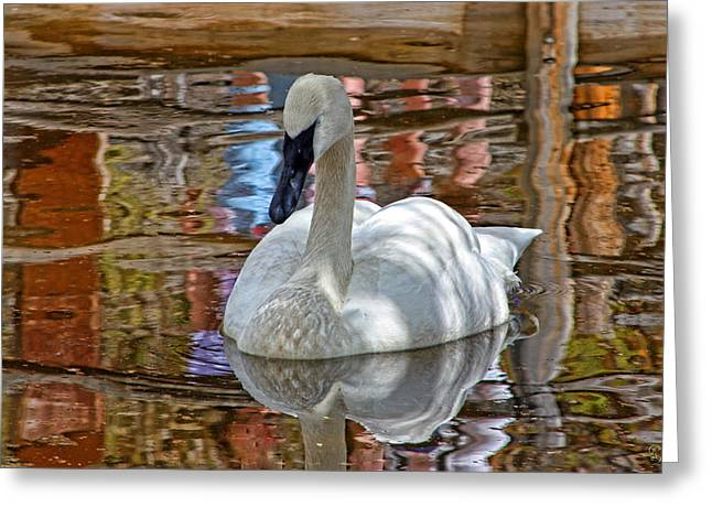 Serenity In Color Greeting Card by Rick Lewis