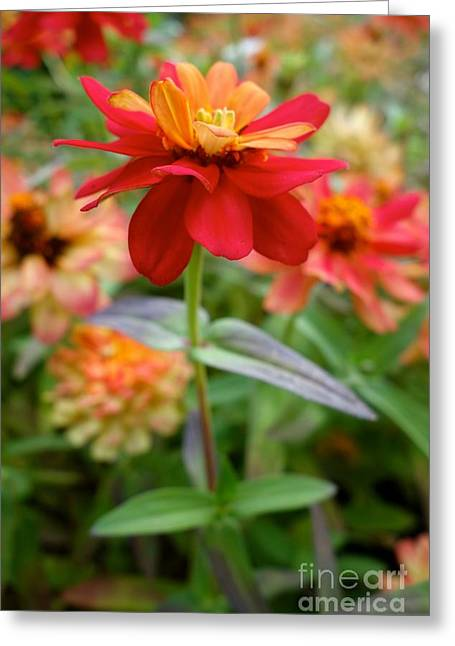 Greeting Card featuring the photograph Serenity In Red by Jacqueline Athmann