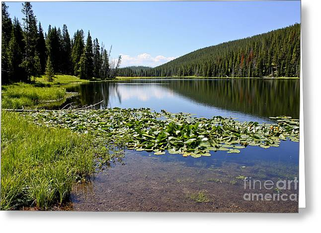 Serenity In Yellowstone Greeting Card by Teresa Zieba