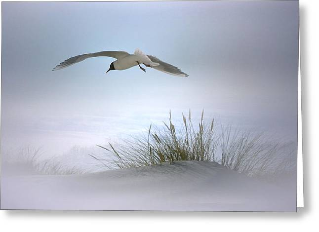 Serenity Greeting Card by Nina Bradica