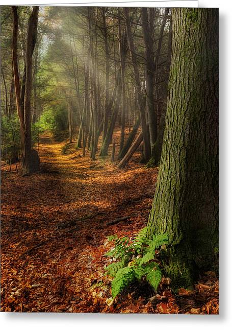 Serenity Of The Forest Greeting Card by Bill Wakeley