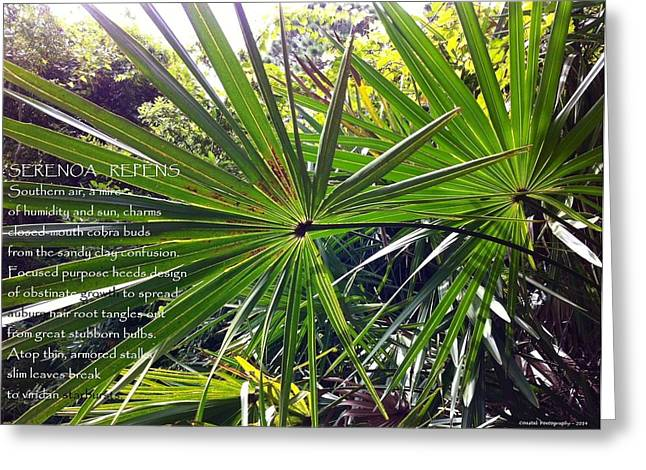 Serenoa Repens Greeting Card by Catherine Favole-Gruber