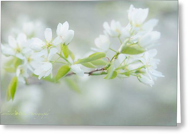 Serviceberry Blossoms Greeting Card by Beverly Cazzell