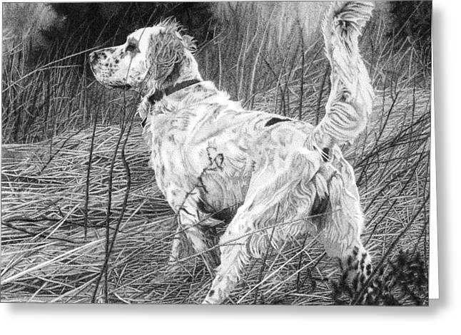 Setter In The Field Greeting Card by Rob Christensen