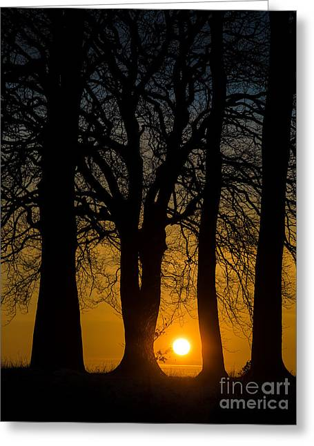 Setting Between The Trees - Wittenham Clumps Greeting Card by OUAP Photography