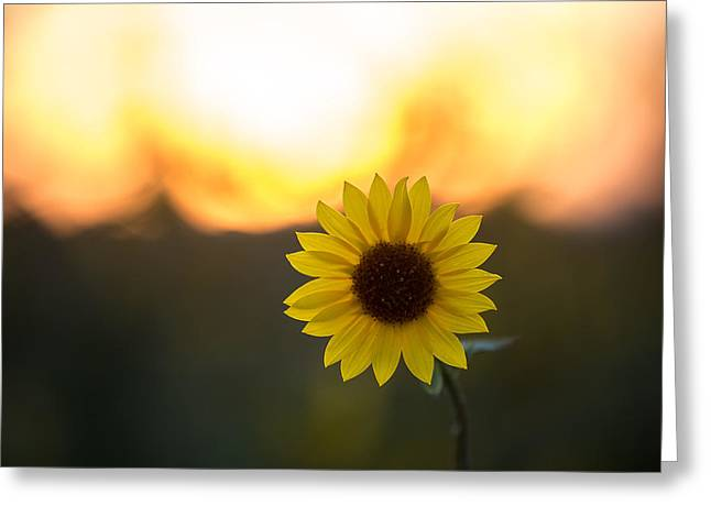 Setting Sun Flower Greeting Card by Peter Tellone