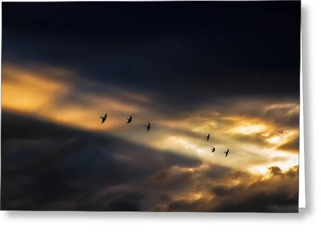 Seven Bird Vision Greeting Card by Bob Orsillo