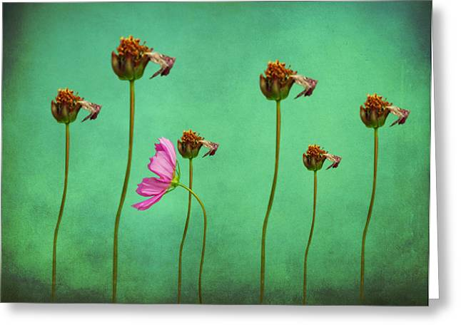 Seven Stems Greeting Card by David Dehner