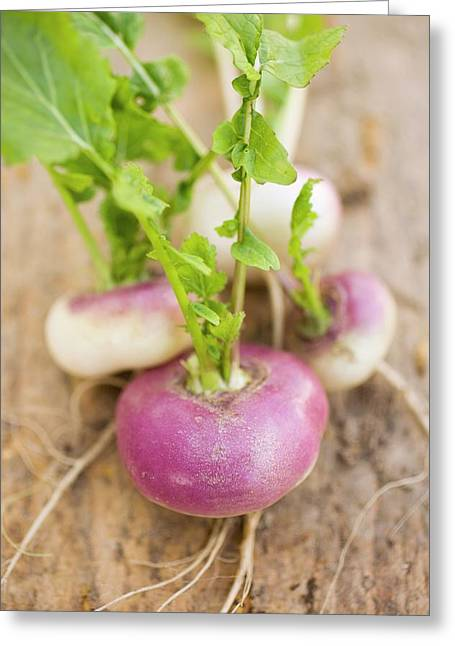 Several Turnips Greeting Card