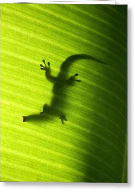 Seychelles Small Day Gecko Greeting Card by Fabrizio Troiani