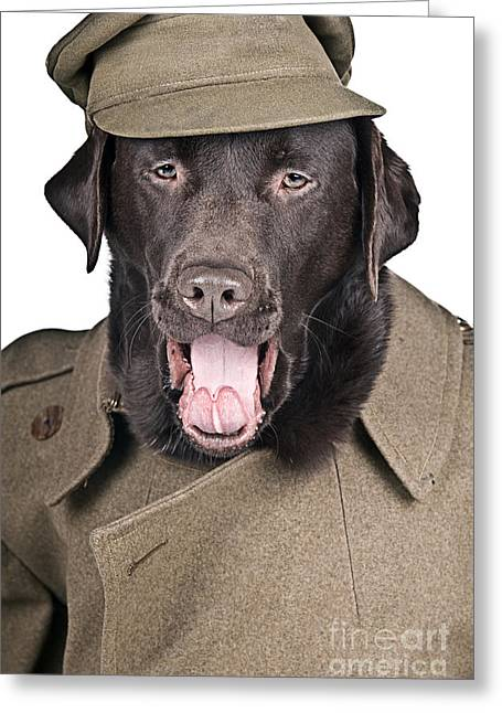 Sgt Dog Shouting His Orders Greeting Card by Justin Paget