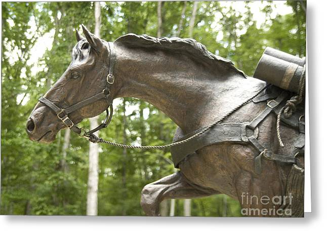 Greeting Card featuring the photograph Sgt Reckless by Carol Lynn Coronios