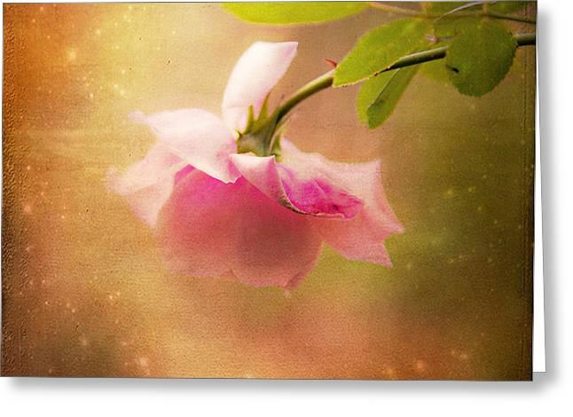 Shabby Chic Rose Print Greeting Card by Theresa Tahara