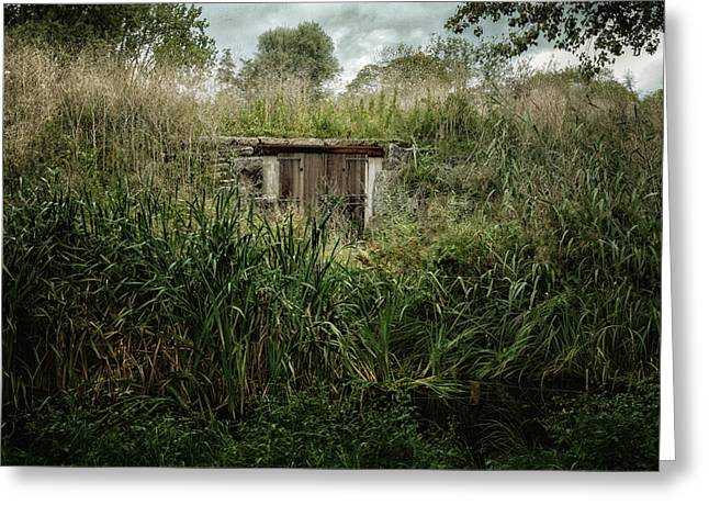 Shack In The Park Greeting Card by Joan Carroll
