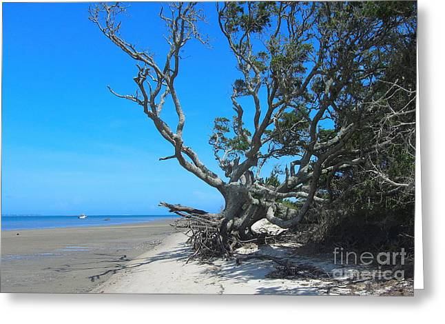 Shackleford Banks Tree 2 Greeting Card