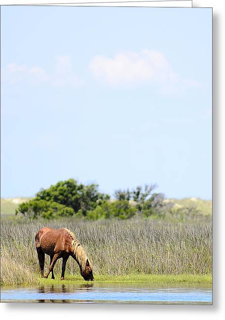 Shackleford Pony Greeting Card by Rex Williams