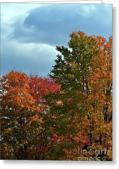 Greeting Card featuring the photograph Shaded by Judy Wolinsky