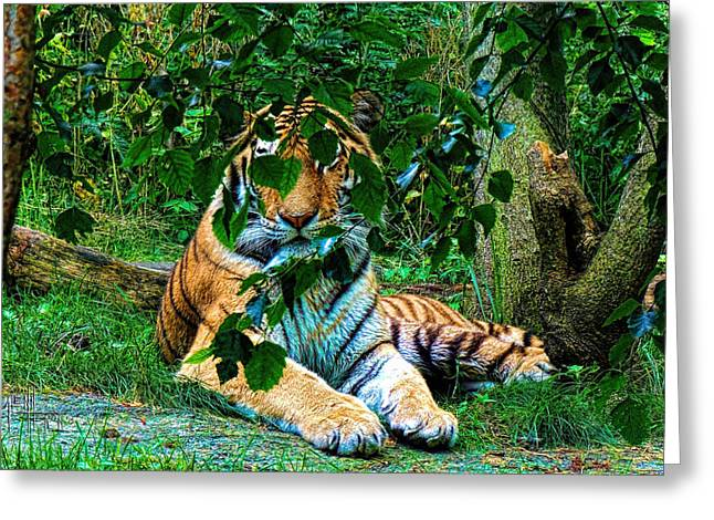 Shaded Stripes Greeting Card by Glenn Feron