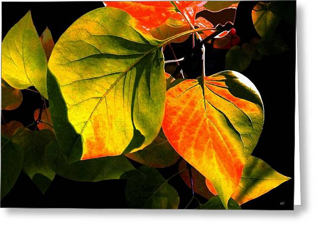 Shades And Shadows Greeting Card by Will Borden