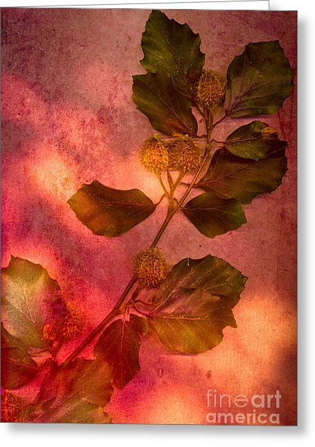 Shades Of Autumn Greeting Card by Jan Bickerton