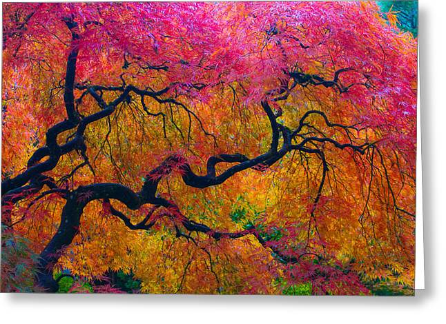 Shades Of Autumn Greeting Card by Patricia Babbitt