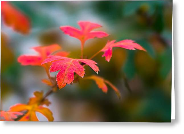 Shades Of Autumn - Red Leaves Greeting Card by Alexander Senin
