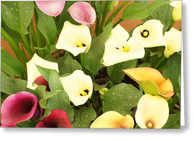 Shades Of Calla Lilies Greeting Card