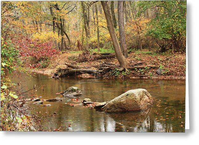 Greeting Card featuring the photograph Shades Of Fall In Ridley Park by Patrice Zinck