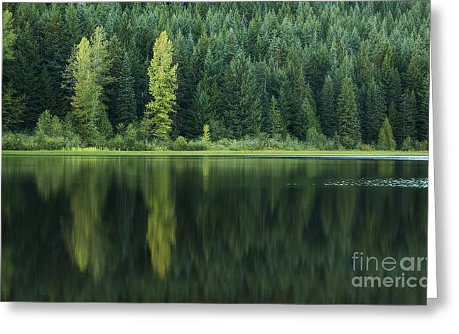 Greeting Card featuring the photograph Shades Of Green by Charmian Vistaunet