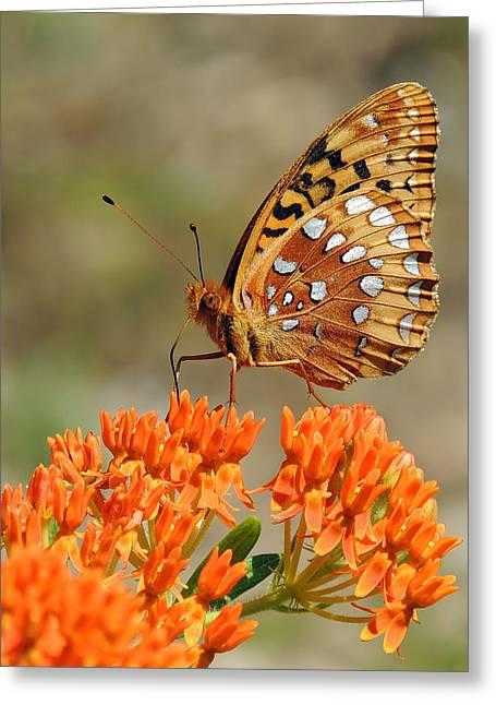 Shades Of Orange Greeting Card