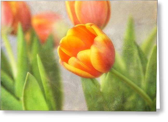 Shades Of Spring Greeting Card