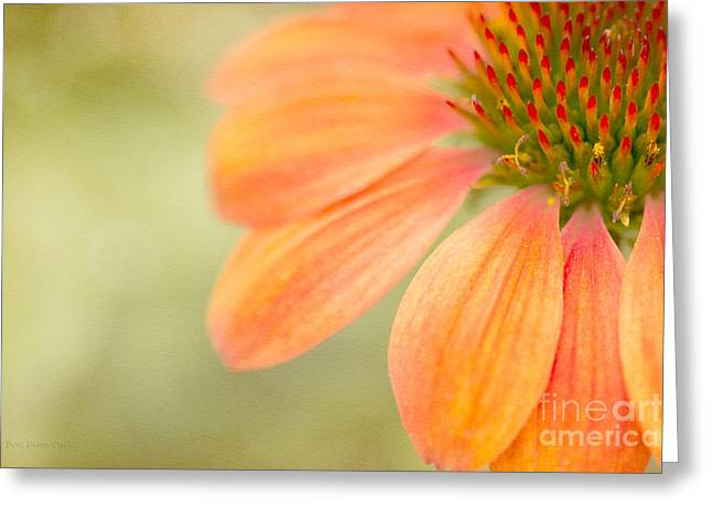 Shades Of Summer Greeting Card by Beve Brown-Clark Photography