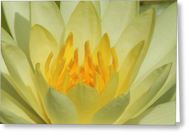 Shades Of Yellow Greeting Card by Teresa Schomig
