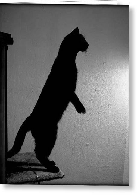 Shadow Cat Greeting Card