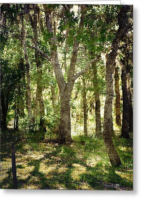 Shadow Forest Greeting Card by Judy Hall-Folde
