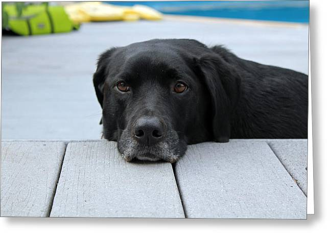 Shadow Lounging On The Deck Greeting Card