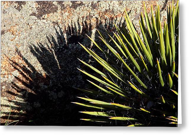 Shadow Of The Yucca Plant Greeting Card by Eric Rundle
