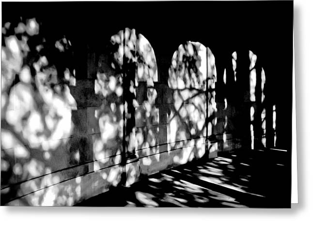 Shadow Play - Black And White Greeting Card