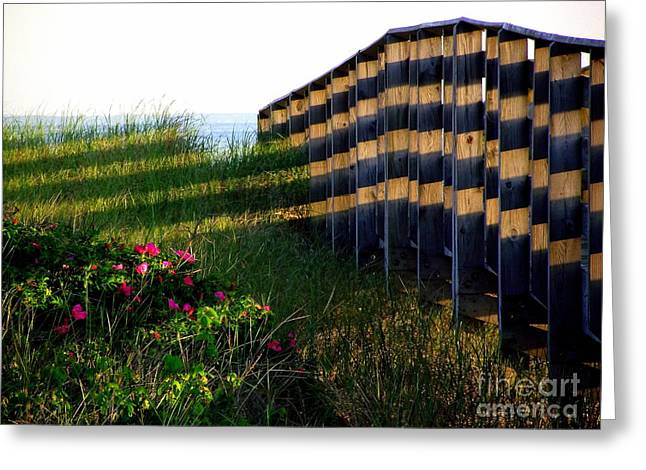 Shadowed Footbridge  Greeting Card by CapeScapes Fine Art Photography