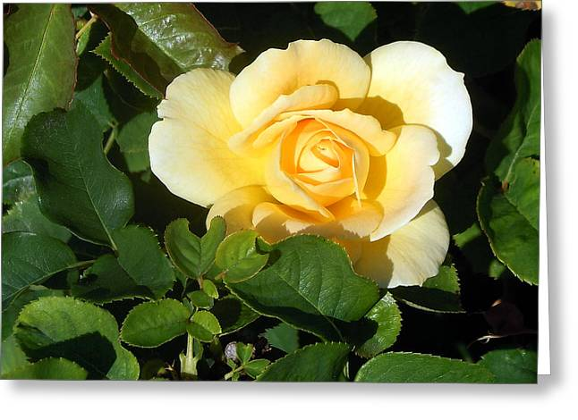 Shadowed Yellow Rose Greeting Card