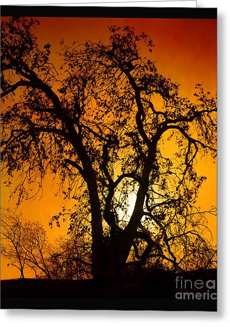 Shadowlands 11 Greeting Card by Bedros Awak