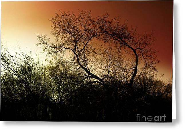 Shadowlands 9 Greeting Card by Bedros Awak