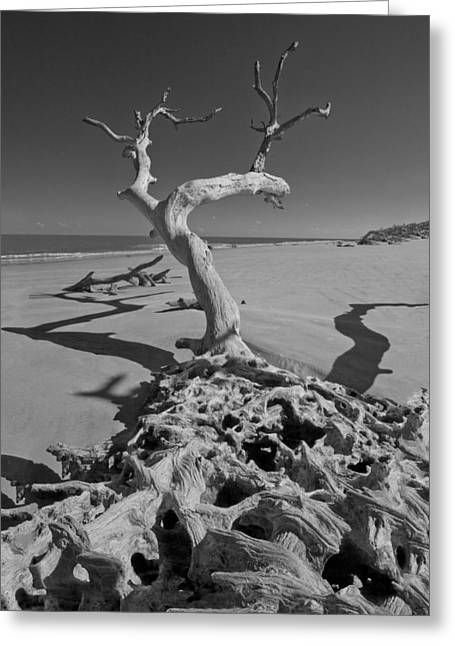 Shadows At Driftwood Beach Greeting Card by Debra and Dave Vanderlaan