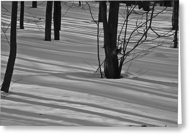 Shadows In Boyertown Park Greeting Card