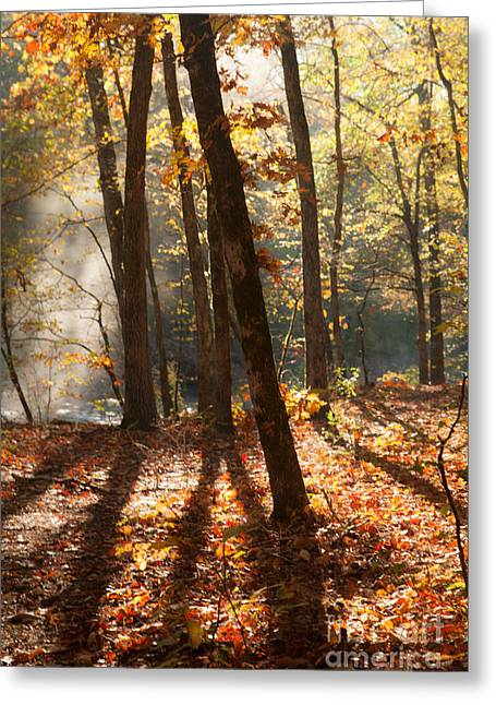 Shadows In The Forest Greeting Card by Iris Greenwell