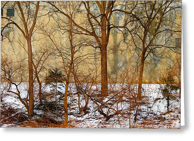 Greeting Card featuring the photograph Shadows In The Urban Jungle by Nina Silver