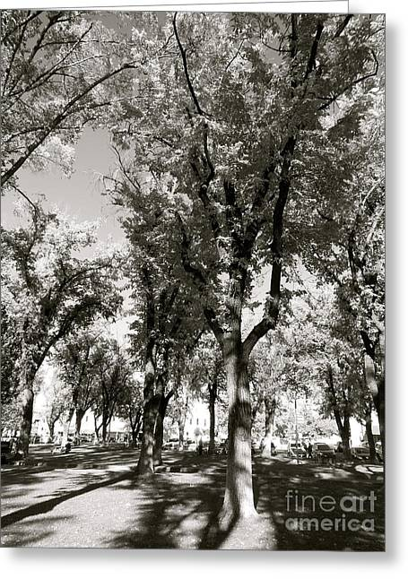 Shadows Of Fall Greeting Card by Monico Art