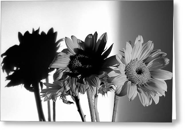 Shadows Of Spring Greeting Card